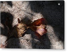 Shading Acrylic Print by Michelle Meenawong