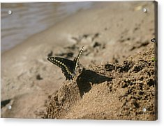 Acrylic Print featuring the photograph shadow Boxer by Marie Neder