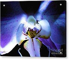 Shadow Dance Acrylic Print by Robyn King