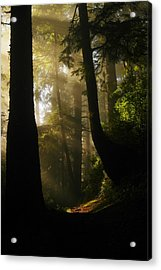Shadow Dreams Acrylic Print by Jeff Swan