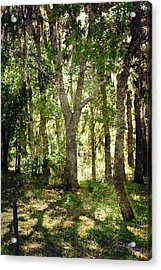 Shadow Forest Acrylic Print