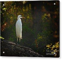 Shadow Heron Acrylic Print