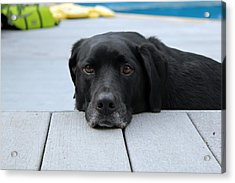 Shadow Lounging On The Deck Acrylic Print