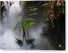 Shadow Mirror Reflection Acrylic Print
