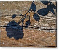 Shadow Of Beauty Acrylic Print by Rita Mueller