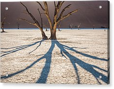 Shadow Of The Camel Thorn - Dead Vlei Photograph Acrylic Print