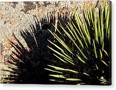 Shadow Of The Yucca Plant Acrylic Print by Eric Rundle