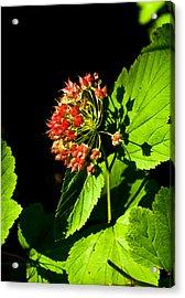Shadow Pla 570 Acrylic Print