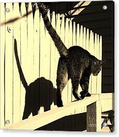 Shadow Walk Acrylic Print by Judy Via-Wolff