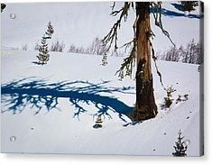 Shadowland Acrylic Print