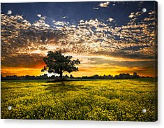 Shadows At Sunset Acrylic Print by Debra and Dave Vanderlaan