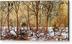 Acrylic Print featuring the photograph Shadows In The Urban Jungle by Nina Silver