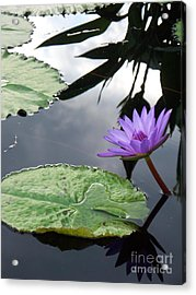 Shadows On A Lily Pond Acrylic Print by Eric  Schiabor