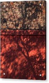 Shadows On The Wall Acrylic Print by Karol Livote