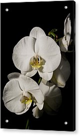 Shadowy Orchids Acrylic Print