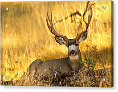 Acrylic Print featuring the photograph Shady Buck by Aaron Whittemore