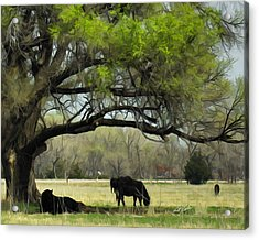 Shady Rest Acrylic Print by Bill Kesler