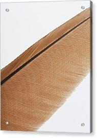 Shaft And Barbs Of Elongated Acrylic Print