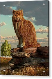 Shaggy Cat Acrylic Print by Daniel Eskridge