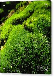 Shaggy Moss Acrylic Print