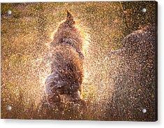 Shaking Beast Acrylic Print