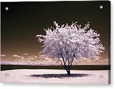 Shaking The Tree Acrylic Print by Mike Irwin