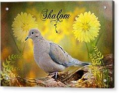 Shalom Acrylic Print by Bonnie Barry