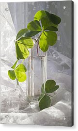 Shamrocks In A Vintage Bottle Acrylic Print