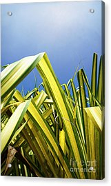 Acrylic Print featuring the photograph Shape Of Hawaii 9 by Ellen Cotton