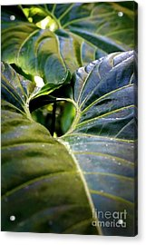 Acrylic Print featuring the photograph Shapes Of Hawaii 11 by Ellen Cotton