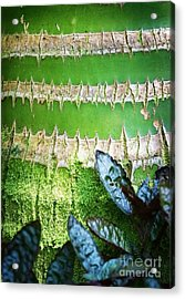 Acrylic Print featuring the photograph Shapes Of Hawaii 13 by Ellen Cotton