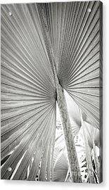 Acrylic Print featuring the photograph Shapes Of Hawaii 8 by Ellen Cotton