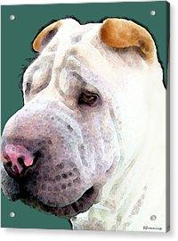 Shar Pei Art - Wrinkles Acrylic Print