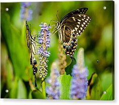 Sharing A Drink Acrylic Print