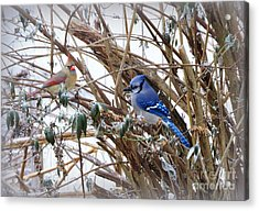 Acrylic Print featuring the photograph Sharing by Brenda Bostic