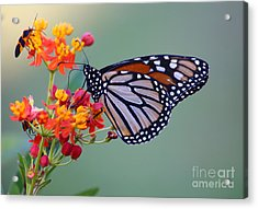 Sharing Acrylic Print by Marty Fancy