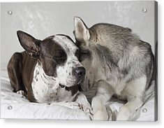 Acrylic Print featuring the photograph Sharing Secrets  by Brian Cross