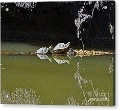 Sharing Sliders Acrylic Print by Al Powell Photography USA
