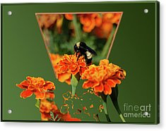 Acrylic Print featuring the photograph Sharing The Nectar Of Life by Thomas Woolworth