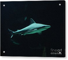 Shark-09451 Acrylic Print by Gary Gingrich Galleries