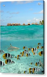 Over-under With Shark And Butterfly Fish At Bora Bora Acrylic Print
