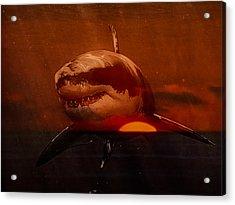Shark In A Sunset Acrylic Print