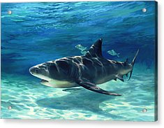 Shark In Depth Acrylic Print by Laurie Hein