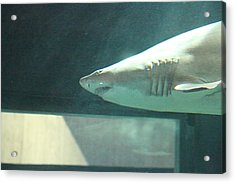 Shark - National Aquarium In Baltimore Md - 121220 Acrylic Print by DC Photographer