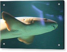 Shark - National Aquarium In Baltimore Md - 121224 Acrylic Print