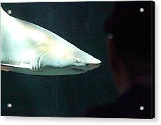 Shark - National Aquarium In Baltimore Md - 12126 Acrylic Print