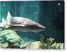 Shark - National Aquarium In Baltimore Md - 12129 Acrylic Print by DC Photographer