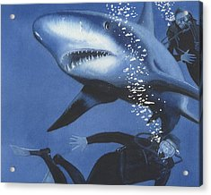 Sharkbait Acrylic Print by Denny Bond