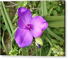 Sharp Purple Acrylic Print by Tayt Dame