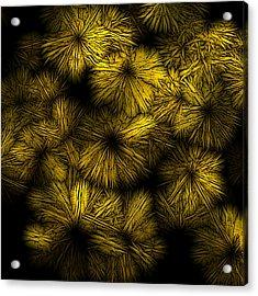 Shattered Daisy 5 Acrylic Print by Patricia Keith